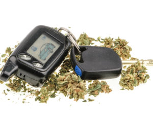 Marijuana Car Police Search