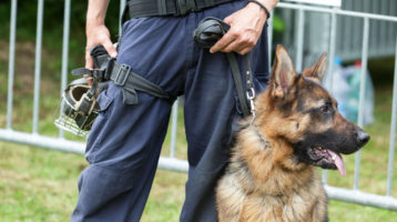 Drug Sniffing Dogs And Your Rights In Minnesota